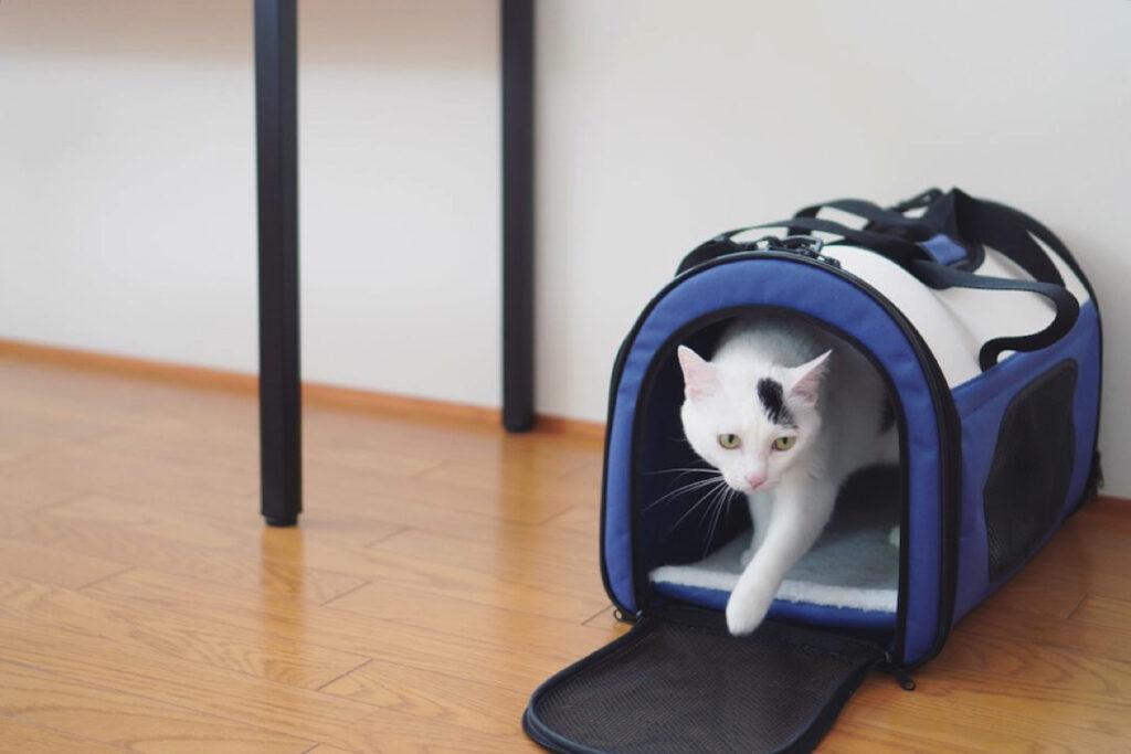 おもち「最近部屋に新しいバッグが置いてあってさ、案外気持ち良くて、よく入ってるよ」