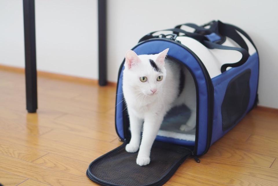 おもち「え!? 病院に行く時のバッグ? そんなわけないよね!? ずっと置いてあるから、新しいベッドだよね?」