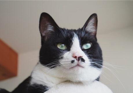ベルカ「私はアゴをのせて、窓の外を見張るのが好きです。変な人がきたら、シャーって言う準備はできてますよ」