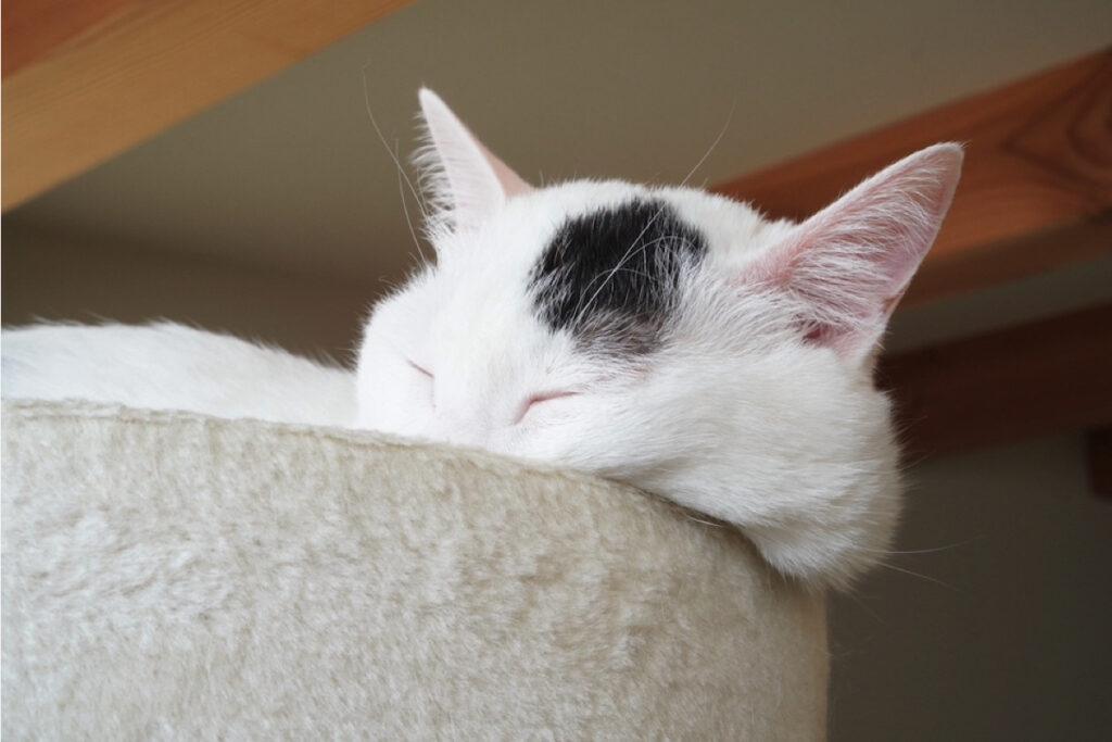 おもち「ベルちゃんは真面目だなぁ。眩しすぎるから、カーテン閉めてほしいんだけど。眩しくても寝るけどさ」