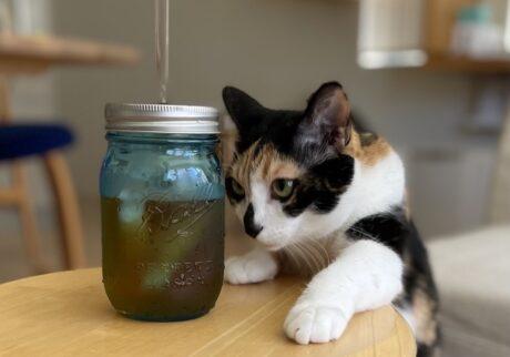 いいな、いいな。アタシもこういうグラスでお水を飲みたいな。かわいいの、大好き。