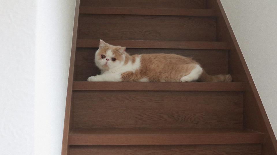 に、2階に行くのは、ちょっと待ってほしいじょ……!