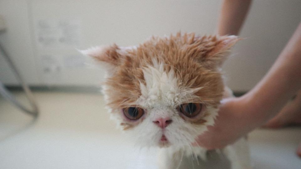 めちゃくちゃ洗われてるじょ……。