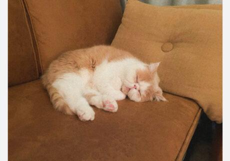 おれのお気に入りのソファとクッションだじょ。ふかふかでうっとりなんだじょ……。