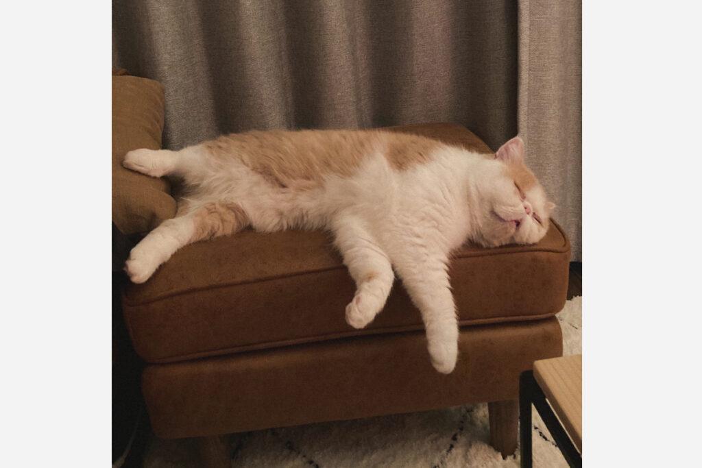 寝相が素晴らしいおれだじょ。自分を抱きしめながら眠るんだじょ。