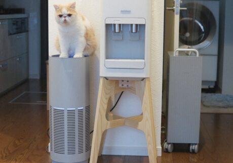 何してるかって? 決まってるじょ。空気清浄機の上で精神統一だじょ。