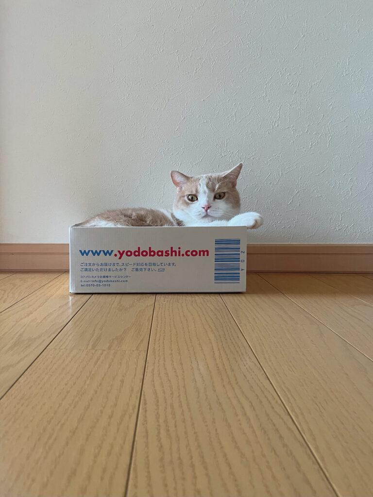 ぼくのお気に入りを教えるね。この素敵な箱だよ。もしかしたら、通りすがりの親切な誰かさんが、あらあらこんなところで、おかわいそうに……って、ササミを置いてってくれるかもしれないでしょ。ちょっとだけ、せつない顔をして待つのがコツだよ。