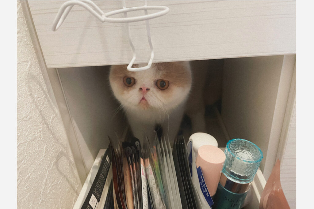 おーい! 閉めないでほしいじょ! 最高の隠れ場所を見つけたんだじょ。