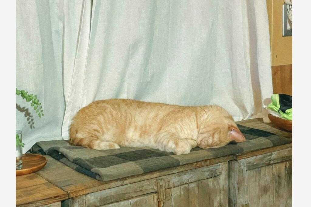 最近はこうやってうつ伏せ寝するのが落ち着くんだよね。