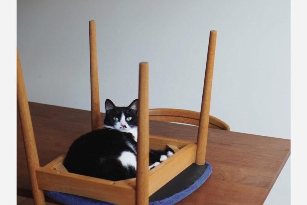 ベルカ「柱が飛び出てるかっこいいベッドを見つけました。いいでしょ」