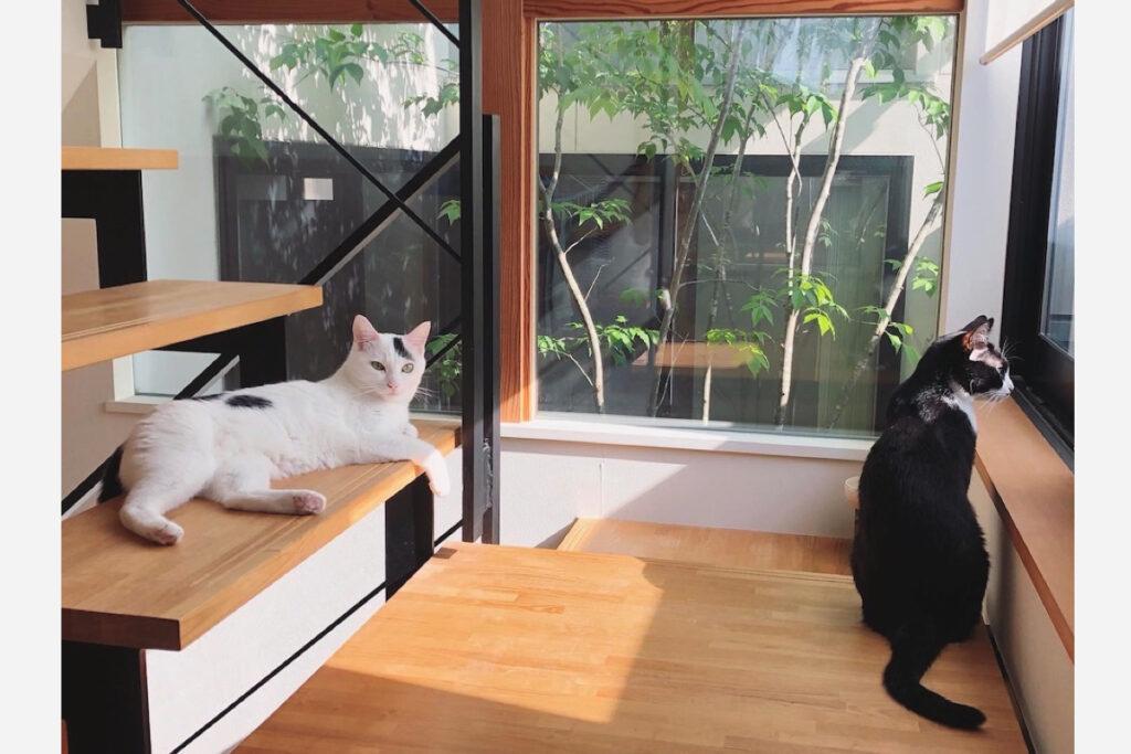 おもち「この階段のとこちょうどいい温度だよね」 ベルカ「私も好きです。外の監視もしやすいので」