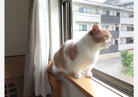 ぼくのおしごとはニャルソックです。こうやってね、いつも見張ってるんだよ。 よし、今日もお外を確認! 異常な~し。