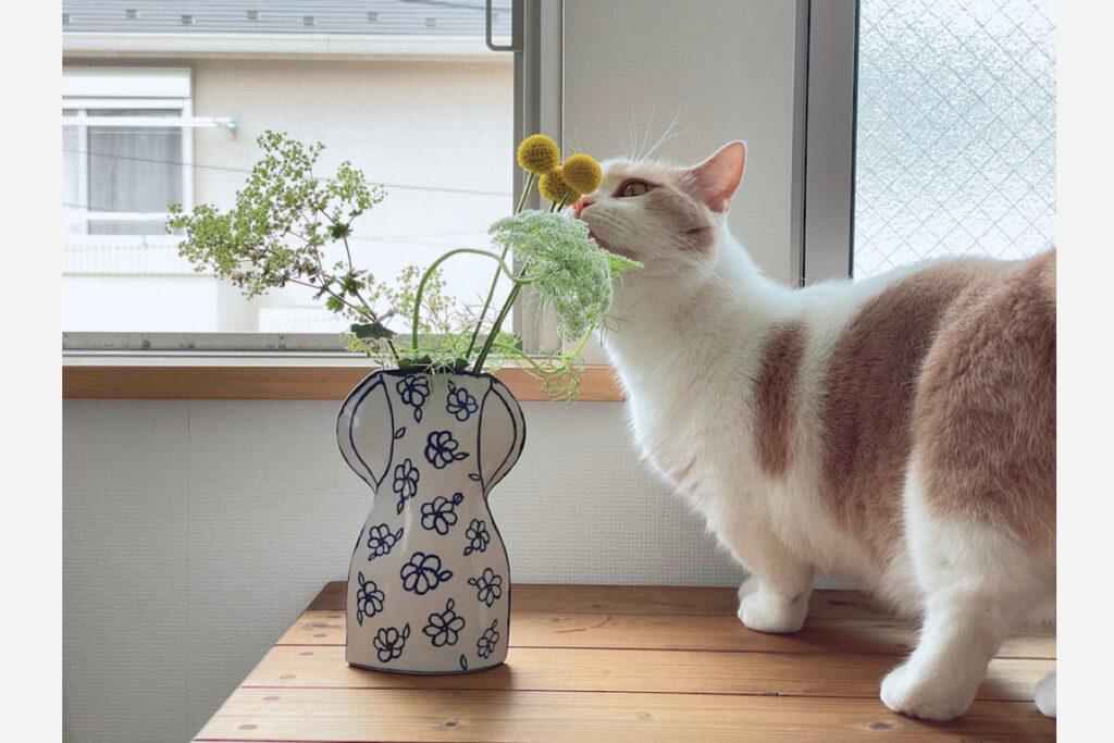 黄色のまんまるちゃんもかわいいね。これなんてお名前のお花だったかな。ん~。ニャラスペディ、じゃなくて、クラスニャディ……でもなくて。あっ! クラスペディア! でもぼく、また忘れちゃうかもしれないから、これからも黄色のまんまるちゃんって呼ぶね。よろしくね、まんまるちゃん。