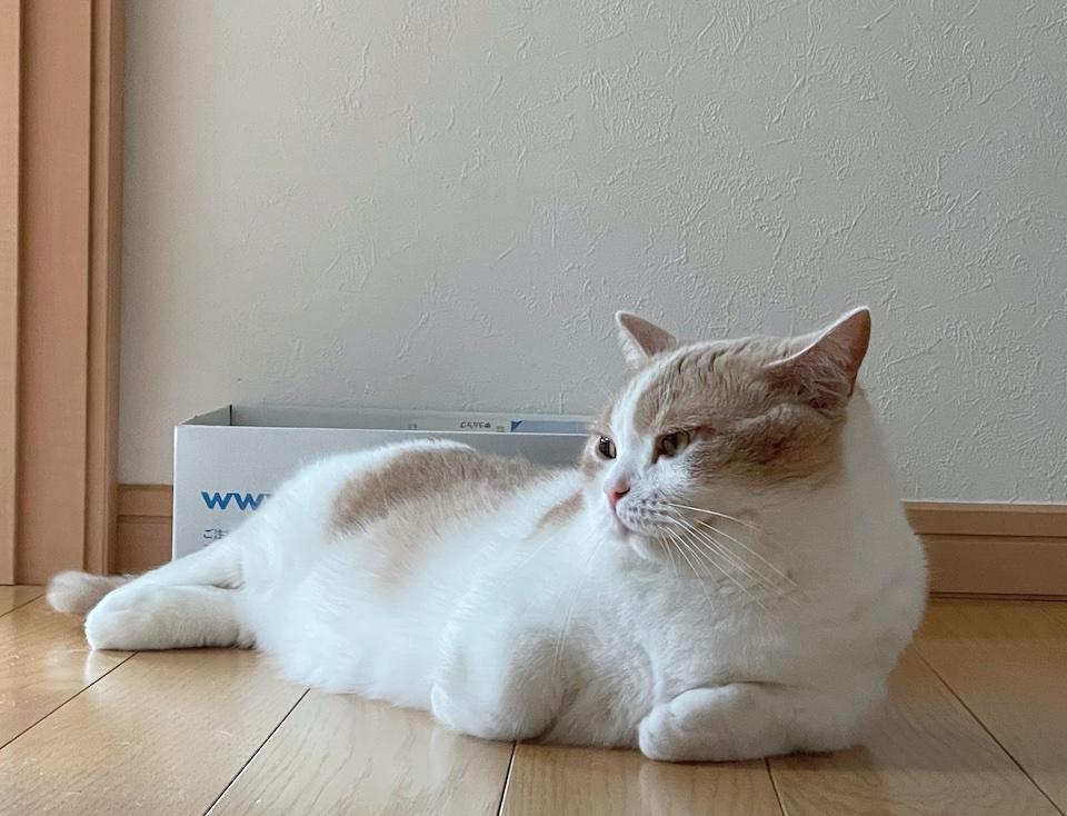 横たわるアザラシに似ていると、よく言われます。ぼくは、ネコですから! 失礼しちゃう!