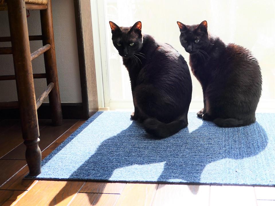 ななとはち「ほら、影だって仲良しでしょ」 なな(左)「尻尾が少し長くて曲がっているのがぼく」 はち(右)「太くて短いのがぼく」