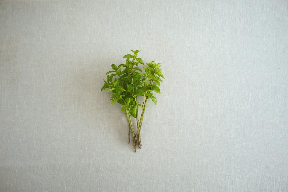 イエルバブエナミント/シソ科の多年草ハーブ。「イエルバブエナ」とは、スペイン語で「良いハーブ」の意味。繁殖力が強く、初心者でも育てやすいハーブです。ハッカのような爽やかな香りが特徴。キューバ発祥のカクテル「モヒート」にも使われることでも知られています。モヒート、ハーブウォーター、ミントティーなどドリンクに入れるときは葉をつぶしながら加えると香りが一層引き立ちます。乾燥した葉をポプリにしてみたり、摘み取った葉を入浴時に入れてみたりしても、爽快感があります。