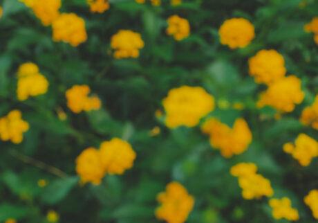 花が好きな君