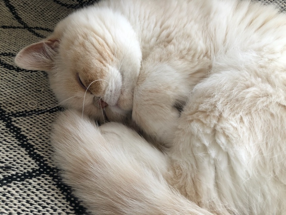 この寝顔を見て、テンちゃんのテンは天使の「天」なんじゃないかと思ったそこのあなた。ハズレです。テンちゃんの「テン」の意味は点々の「点」だそうです。正式名はカタカナだけどね。