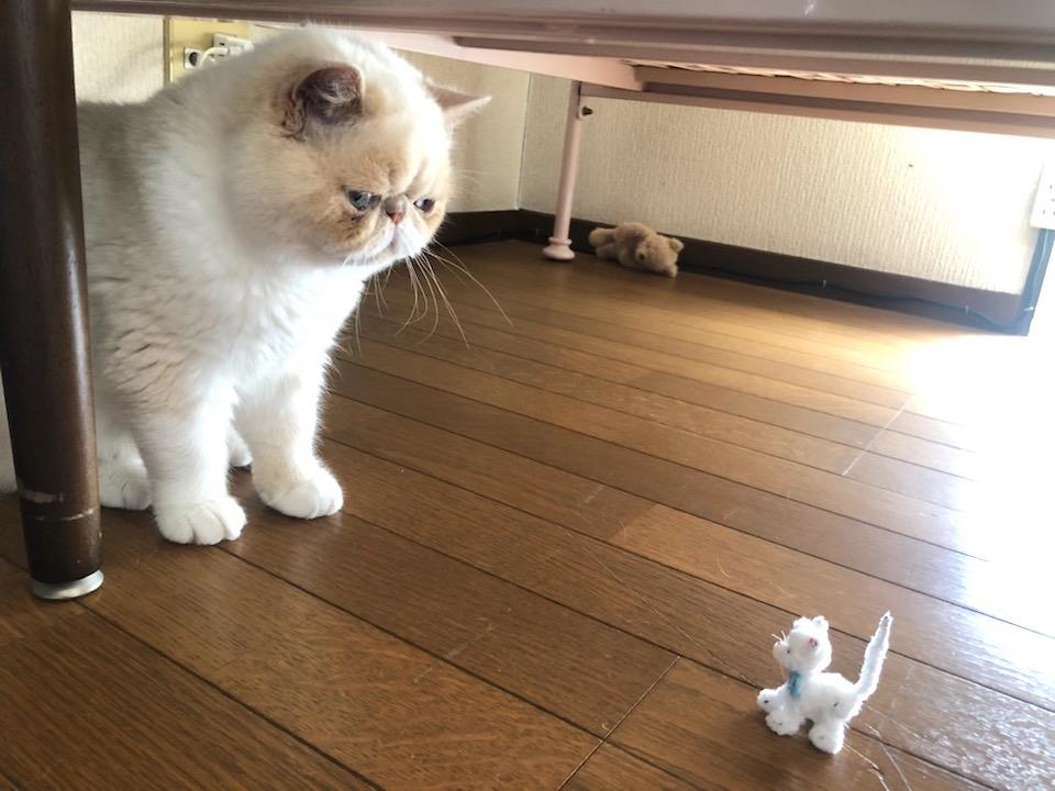 今日、とっても小さなねこに遭遇しました。テンちゃんは赤ちゃんの時だって、こんなに小さくなかったよ。こんなに小さいねこがいるなんて、世の中まだまだ不思議なことがいっぱいです。
