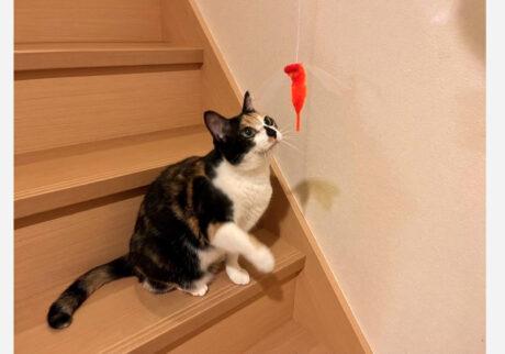 今日は階段を使った宅トレをしてるの。足元が不安定だから、体力も神経も使うのよね。狙いを定めて……