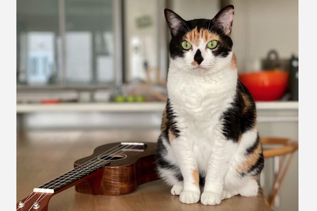 これからも、カッコよく弾けるように練習をがんばり……って、がんばりません。だって、ねこだもん。みなさん、ありがとう! またどこかでお会いいたしましょうね!