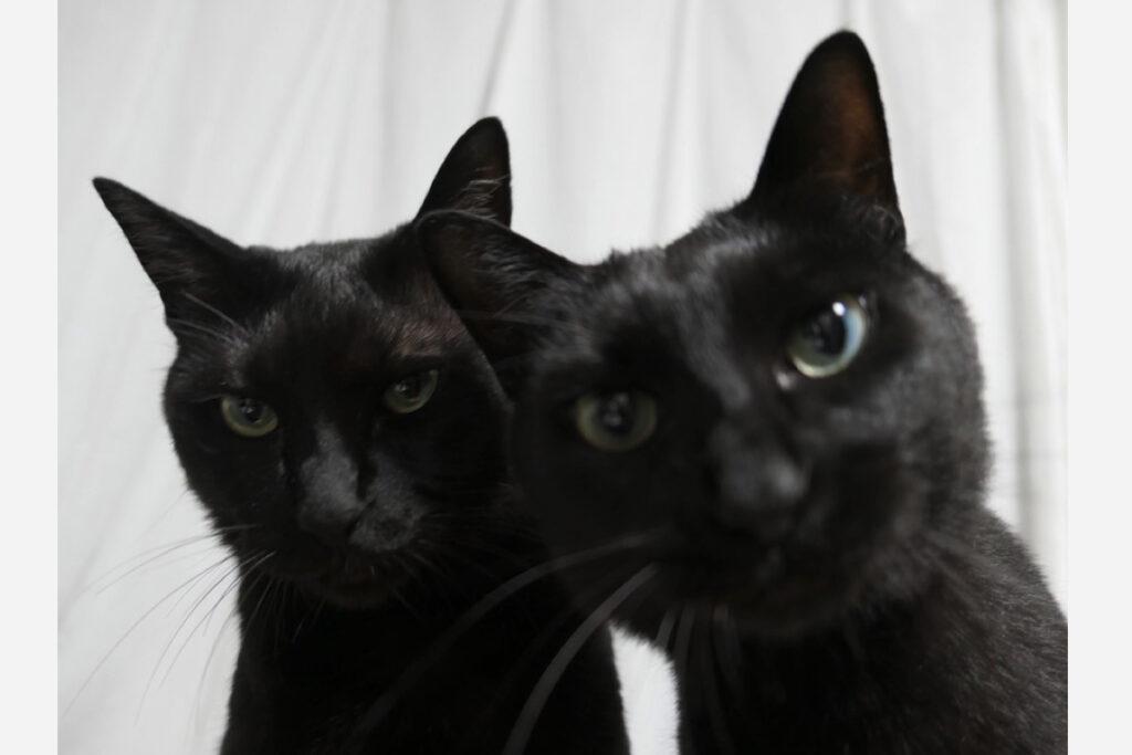 はち(右)「だって写真撮られるの好きなんだもーん」