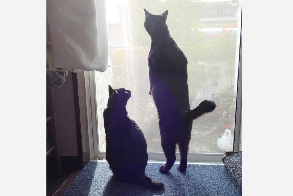 なな(右)「よっこいしょ」 はち(左)「なんかいる?」
