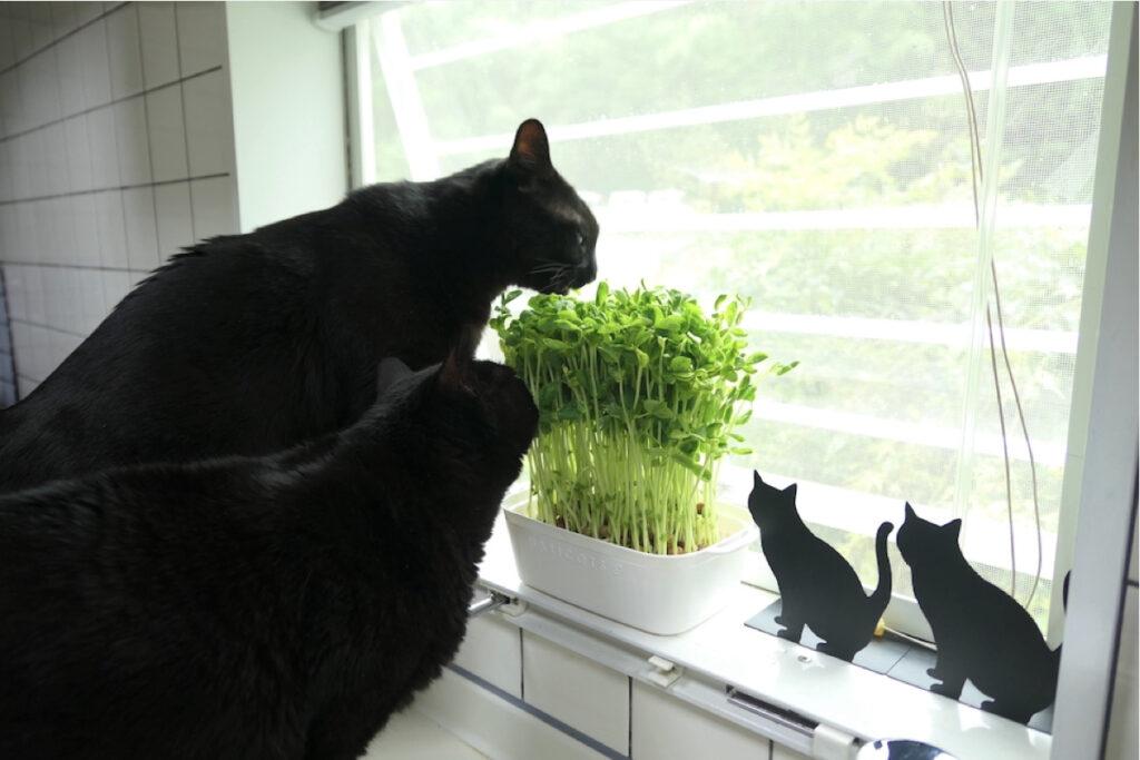 ななとはち「僕たち草食男子」