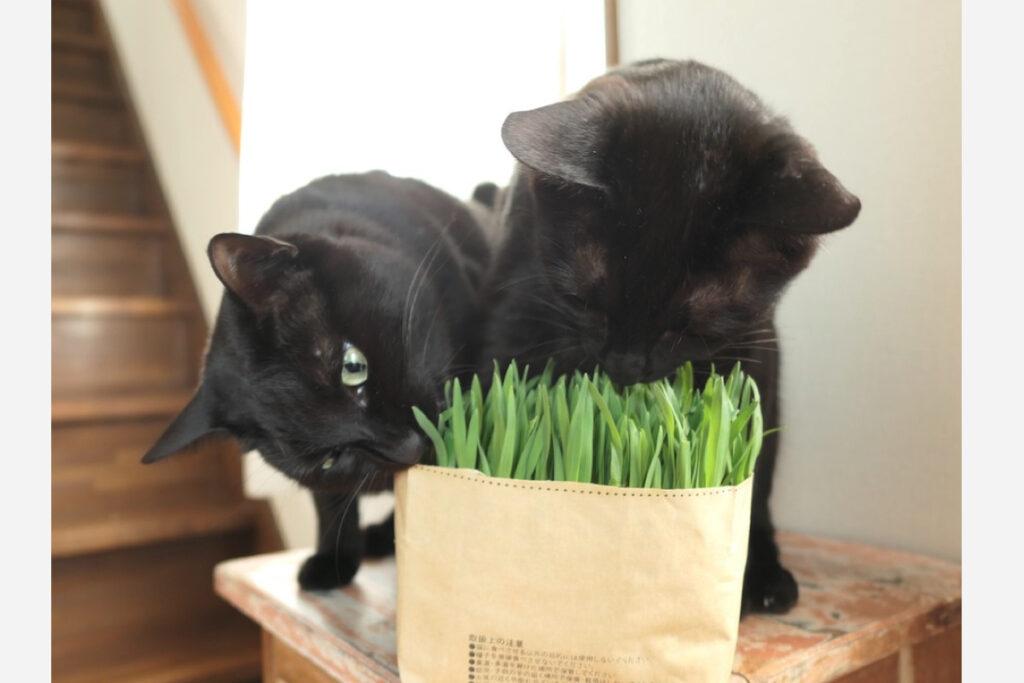 ななとはち「新鮮な草が大好き」