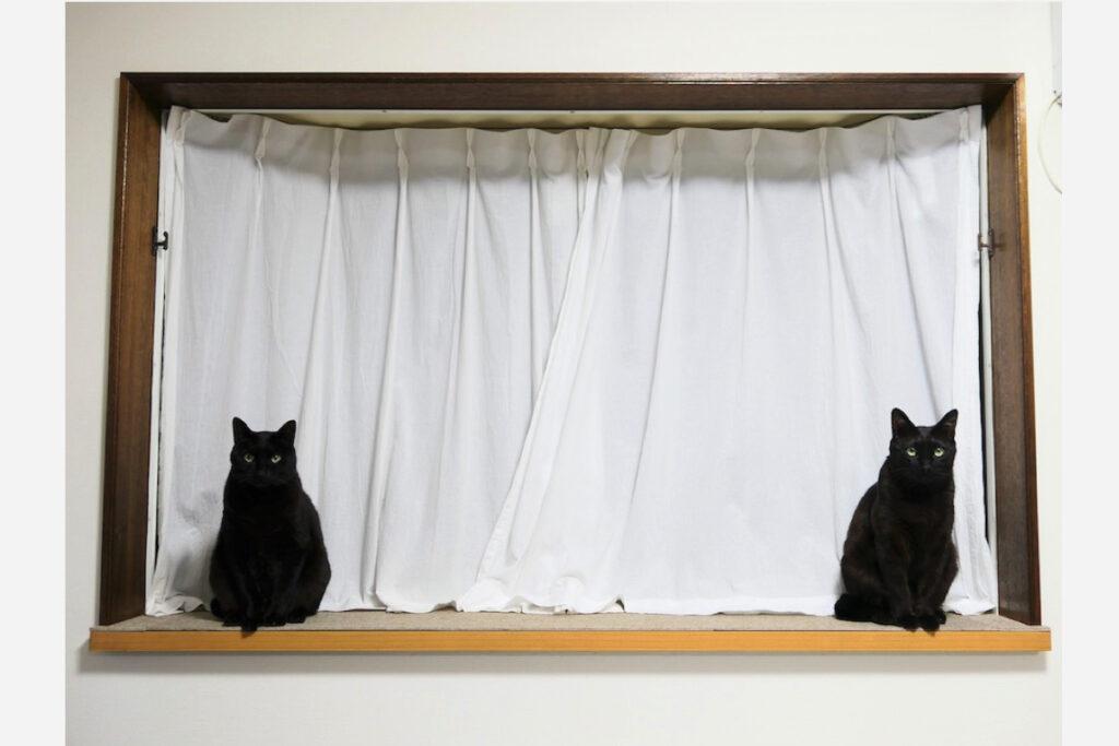 ななとはち「ここはリビングの出窓。」