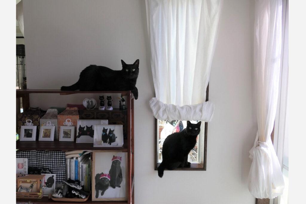 はち(右)「ここはリビングの明かり取りの小窓、お一人様用なんだ」 なな(左)「ねぇ、次は僕の番だよ」
