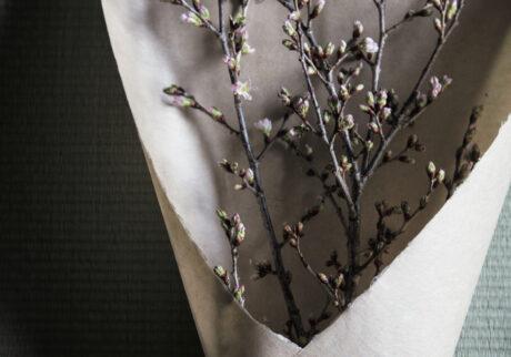 花見を持ち帰る「桜の花束」。
