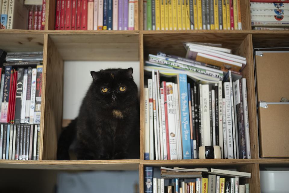 壁いっぱいに造り付けにした本棚の1マスは、紅子の指定席に。