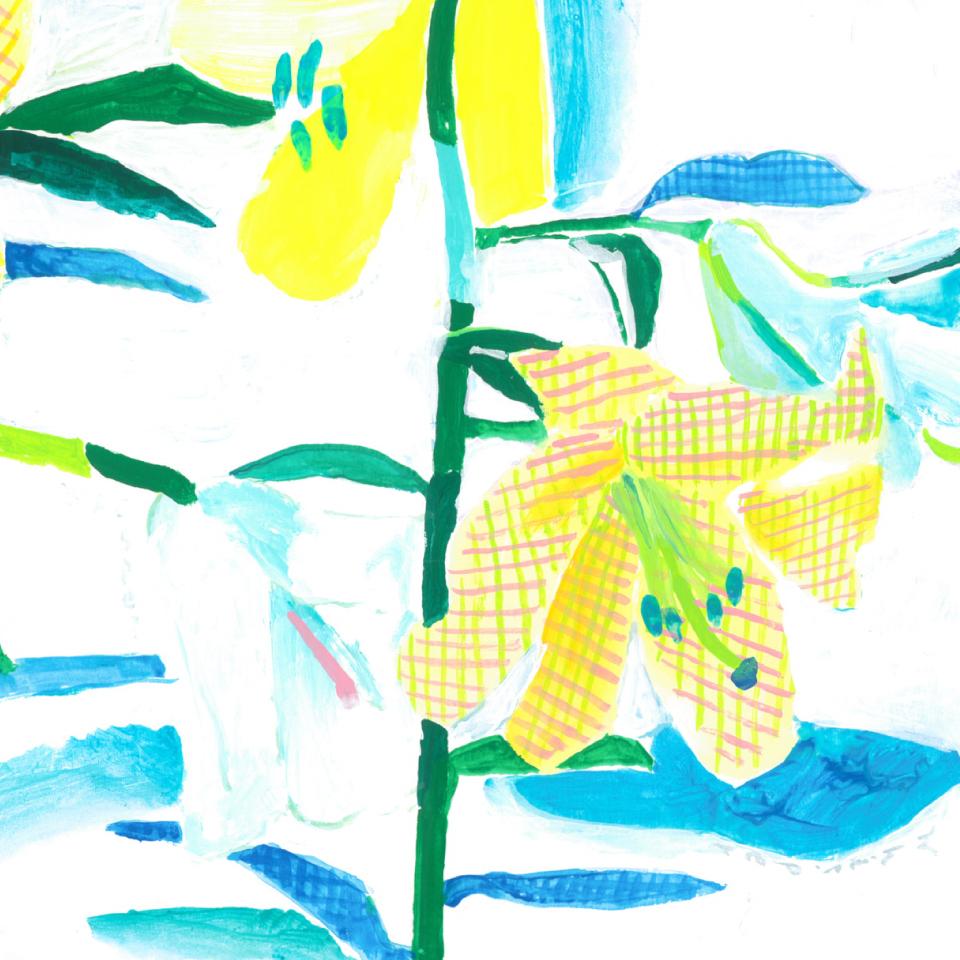 Plaid lily