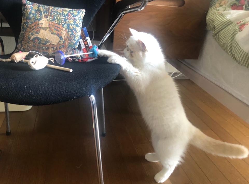 今日はどのおもちゃで遊ぼうかな。(全部ネズミだな!) どちらにしようかな。テンの神様の言う通り! ん……? テンの神様……って誰?