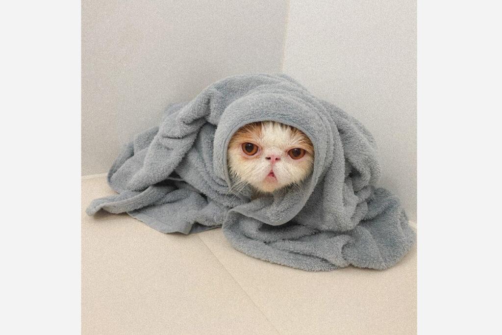 足を滑らせてお風呂に落下したじょ。みんなも気をつけてほしいじょ。
