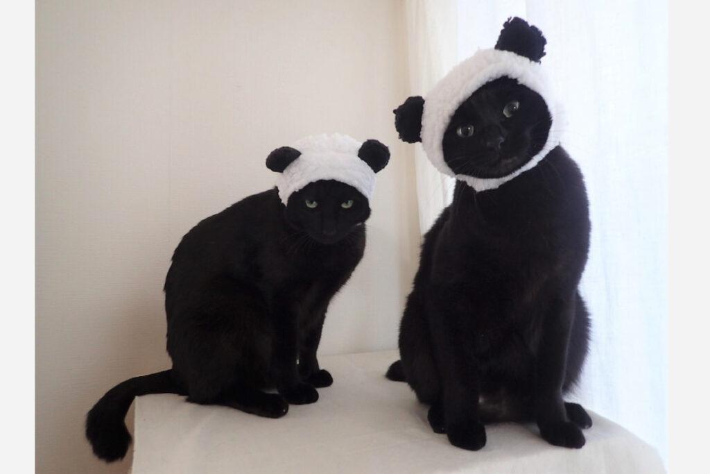 はち(右)「パンダの双子の名前もう決まったかなぁ?」なな(左)「かわいい名前だといいね」