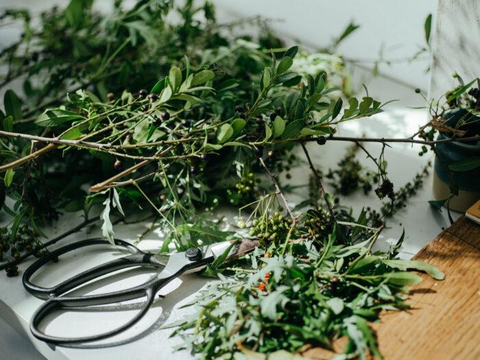 庭のツゲの木を剪定。季節の植物で空間を健やかに。